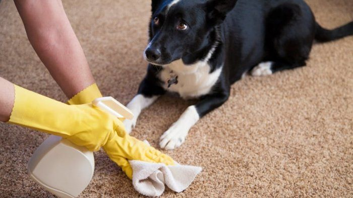 Tips for Removing Pet Stains from Carpet