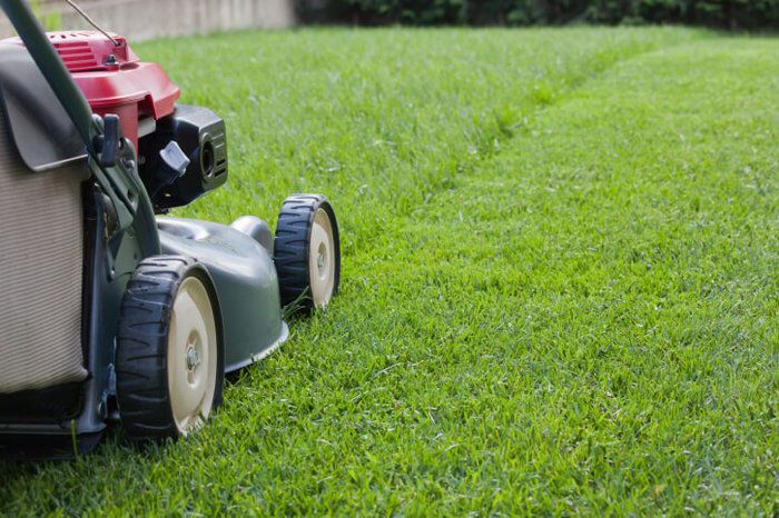 Often Should The Lawn Grasses Be Cut